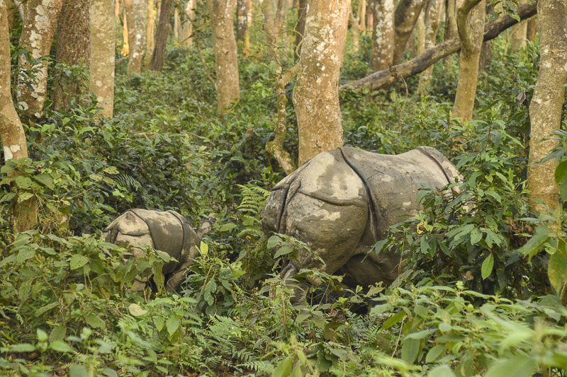 How COVID-19 became a poaching epidemic for Nepal's endangered wildlife
